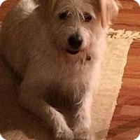 Adopt A Pet :: Junie - Davenport, IA