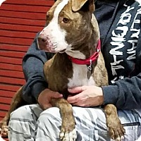 Adopt A Pet :: Miss T - Freeport, IL