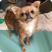 Adopt A Pet :: Grayson - Pontiac, MI