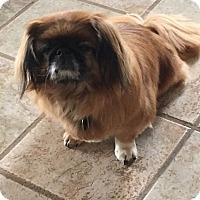 Adopt A Pet :: Baby - Cedaredge, CO