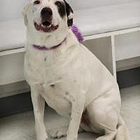 Adopt A Pet :: Toodles - Yukon, OK