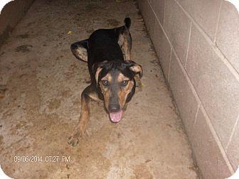 Greyhound Dogs Adoption Oklahoma