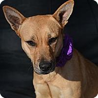 Adopt A Pet :: Wanda - Plano, TX