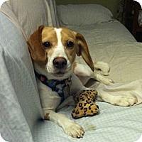 Adopt A Pet :: Ellie Mae - Novi, MI