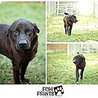 Adopt A Pet :: Phantom - South Park, PA