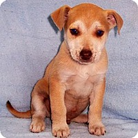 Adopt A Pet :: Chase - Byrdstown, TN
