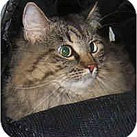 Adopt A Pet :: Perris - Dallas, TX