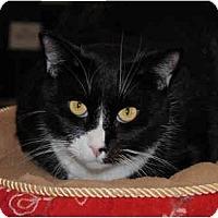 Adopt A Pet :: Mittens - Palmdale, CA