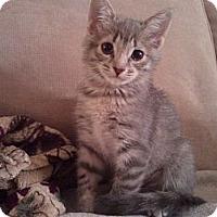 Adopt A Pet :: Topaz - Irvine, CA