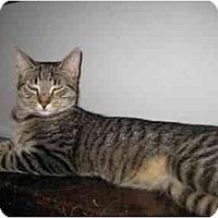 Adopt A Pet :: Michael (KL) - Little Falls, NJ