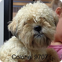 Adopt A Pet :: Colonel - baltimore, MD
