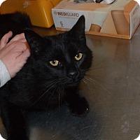 Adopt A Pet :: emery - Muskegon, MI