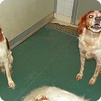 Adopt A Pet :: Victor - Albuquerque, NM
