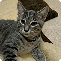 Adopt A Pet :: Meredith Grey - New Egypt, NJ