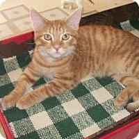 Adopt A Pet :: Stark - Lacon, IL