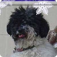 Adopt A Pet :: Diana Ross: Los Fees/spayed - Red Bluff, CA