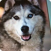 Adopt A Pet :: CHEYENNE VON CELLE - Los Angeles, CA