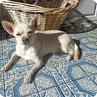 Adopt A Pet :: Nutmeg - Only $45 adoption! - Litchfield Park, AZ