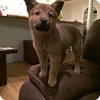 Adopt A Pet :: Liddy - Houston, TX