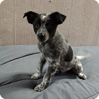 Adopt A Pet :: Montana Adoption pending - Manchester, CT