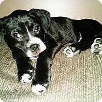 Adopt A Pet :: JeanLuc - Livonia, MI