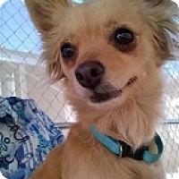 Adopt A Pet :: Montana - Mesa, AZ