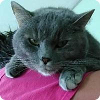 Adopt A Pet :: Tanga - Greensburg, PA