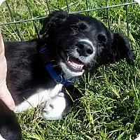 Adopt A Pet :: Grizz - Ogden, UT