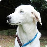 Adopt A Pet :: Melrose - Yardley, PA