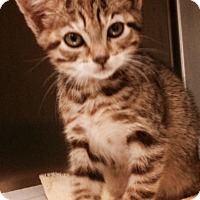 Adopt A Pet :: Monie - Herndon, VA