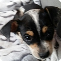 Adopt A Pet :: Oreo - Brea, CA
