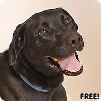 Adopt A Pet :: Milhiser - Walnut Creek, CA