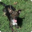 Adopt A Pet :: Brando