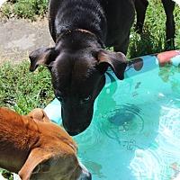 Adopt A Pet :: Skittles - Greeneville, TN
