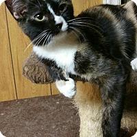 Adopt A Pet :: Arwen - Morganton, NC