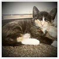Adopt A Pet :: MATILDA - Medford, WI