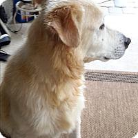 Adopt A Pet :: Nicky - Lehigh, FL