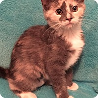 Adopt A Pet :: Bly - Grove City, OH