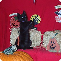 Adopt A Pet :: Darla - Lancaster, CA