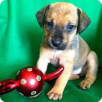 Adopt A Pet :: Nubia - Alpharetta, GA