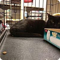 Adopt A Pet :: Penley - Avon, OH