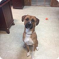 Adopt A Pet :: Kenny - Bryan, OH