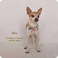 Adopt A Pet :: Kiko - Sherman Oaks, CA