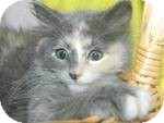 Domestic Mediumhair Kitten for adoption in Clearfield, Utah - Thumbalina