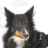 Adopt A Pet :: Abby - Circle Pines, MN