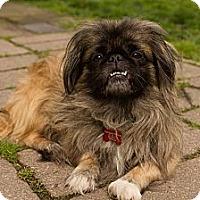 Adopt A Pet :: Bernard - Virginia Beach, VA