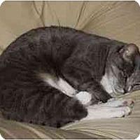 Adopt A Pet :: Mittens - Wakinsville, GA