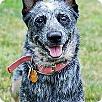 Adopt A Pet :: Kiva - Delano, MN