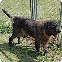 Adopt A Pet :: George - Manning, SC