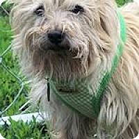Adopt A Pet :: CHINA IN MO - Topeka, KS
